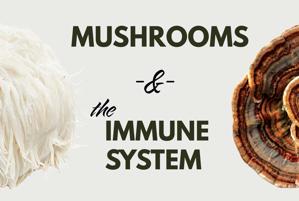 Mushrooms to support and boost immune system